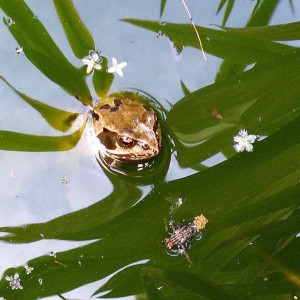 frog-square-3-1