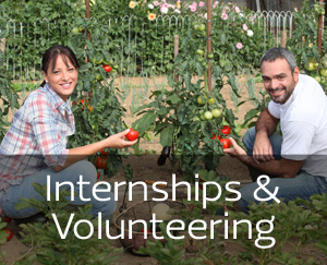 Internships & Volunteering