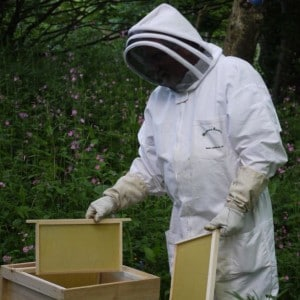 bees are happy with welsh habitat